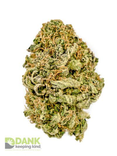 Critical Mass Cannabis at DANK Dispenasary