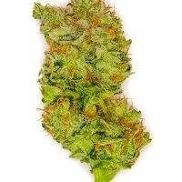 Bruce Banner Cannabis at DANK