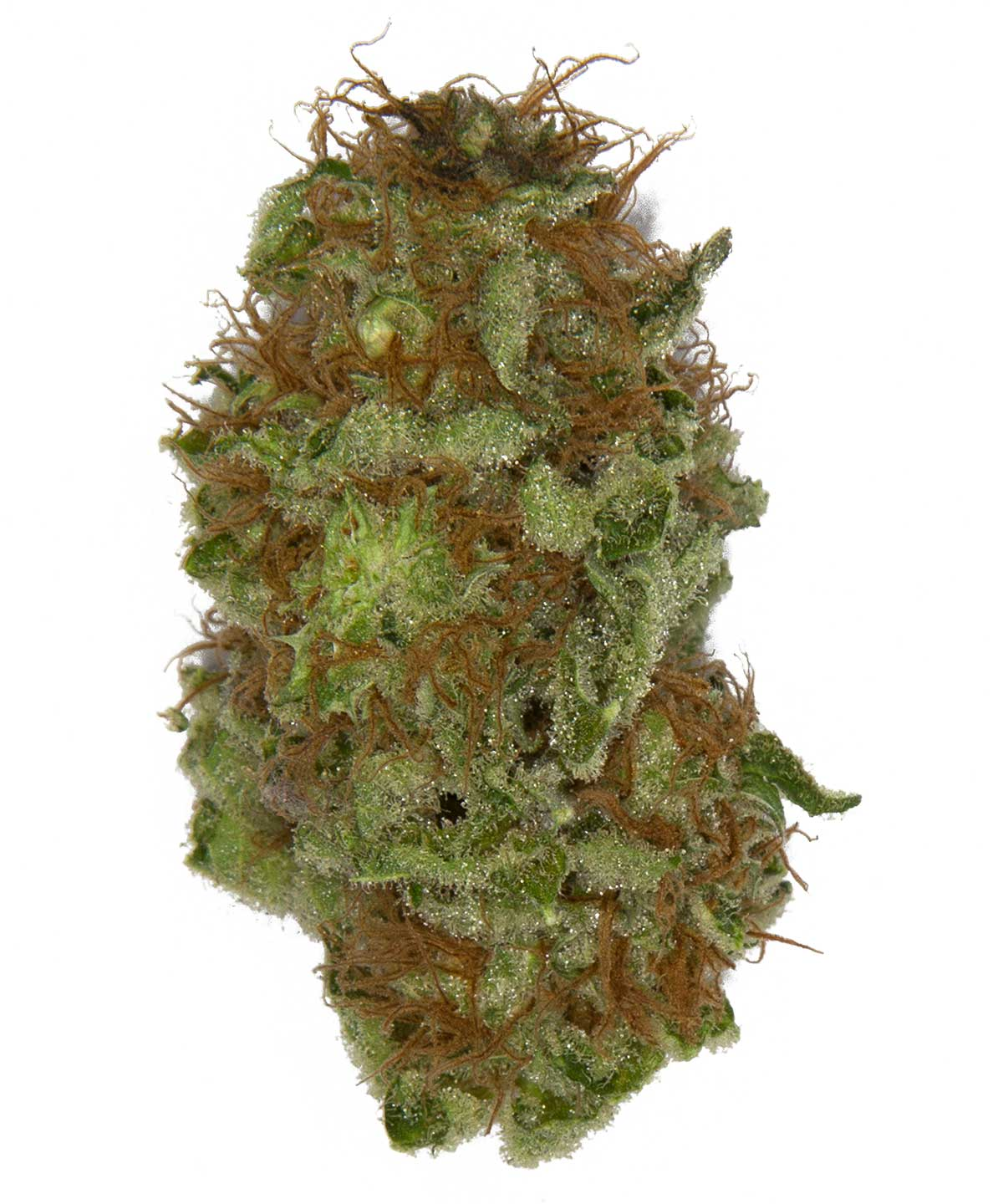 weed maps com with Master Kush on Cannabis Begeistert Investoren Das 8 Milliarden Dollar Geschaeft Cannabis Investors Growing Faster Than The Deals further Sharing Is Caring 2 furthermore Royal Kush additionally Hardglue Shatter West Coast Cure  trashed together with Weed In Colorado Is Be ing Really Cheap.