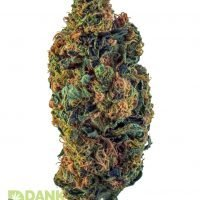 DANK Dispensary Golden Goat