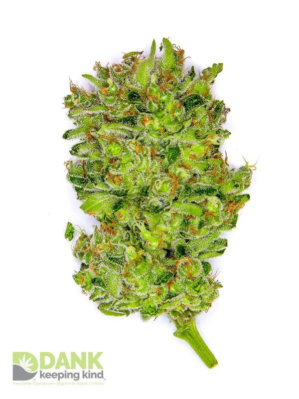 Durban Poison Cannabis at DANK Dispensary