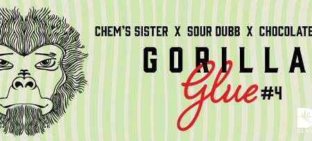 GorillaGlue4