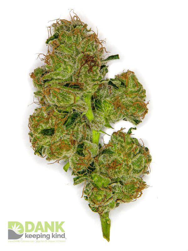 Sour Diesel Cannabis at DANK Dispensary